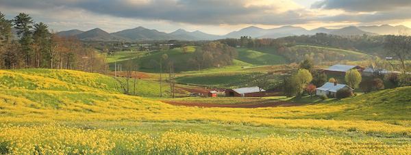 Appalachian Spring  banner